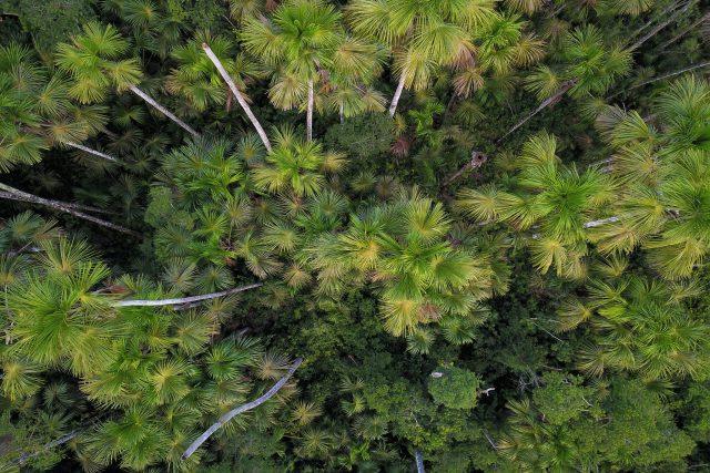 amazon rainforest tours at manu national park