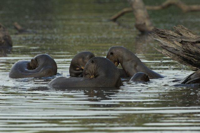 Wildlife of Manu National Park