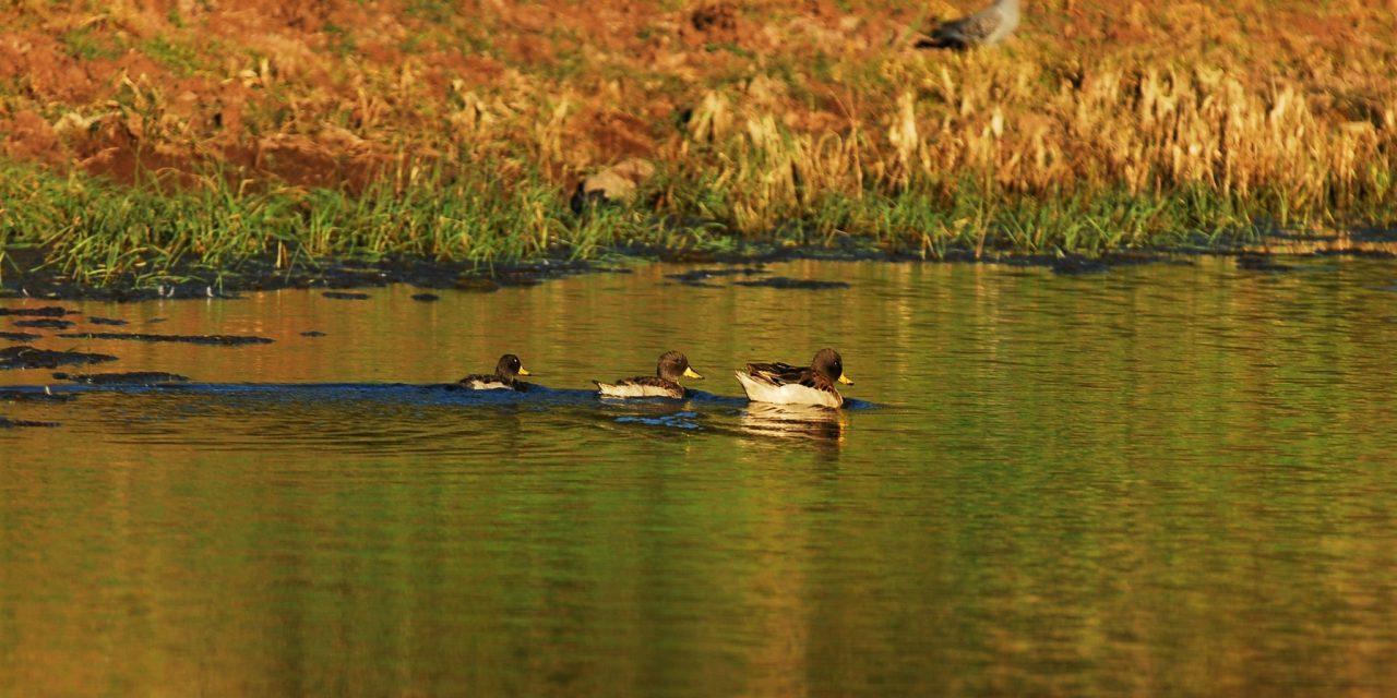 https://wildwatchperu.com/wp-content/uploads/2018/09/Huacarpay-lagoon-1280x640.jpg