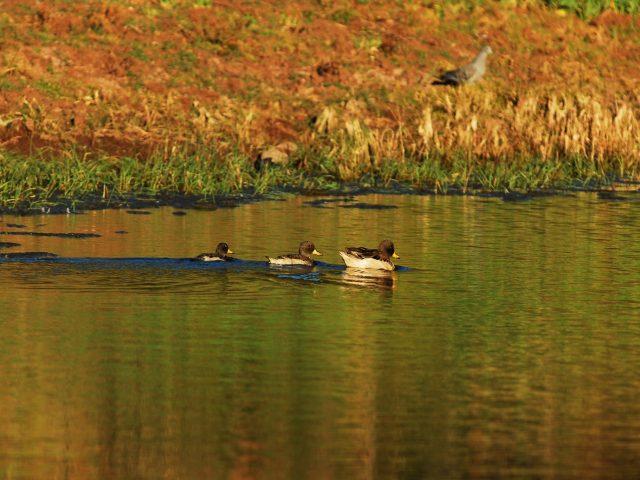 https://wildwatchperu.com/wp-content/uploads/2018/09/Huacarpay-lagoon-640x480.jpg