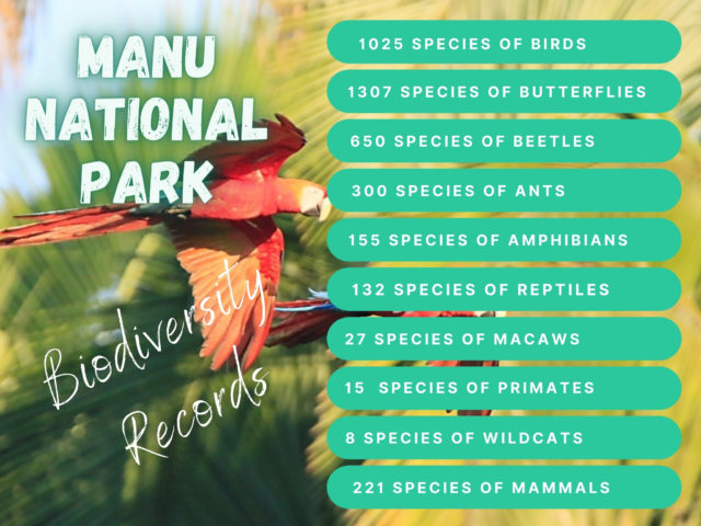 animals-in-manu-national-park