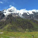 Birding at Abra Malaga Peru, mountain glacier