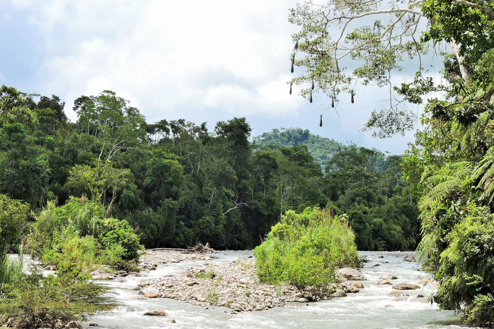https://www.wildwatchperu.com/wp-content/uploads/2019/04/Guadalupe-river.jpg