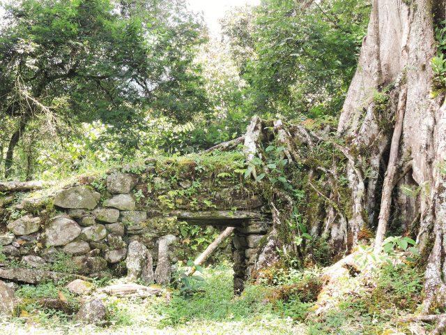 https://wildwatchperu.com/wp-content/uploads/2019/04/fig-trees-overgrowths-on-Inca-Ruins-640x480.jpg