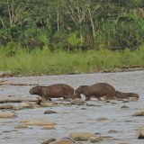 2 Days Amazon Tour Peru