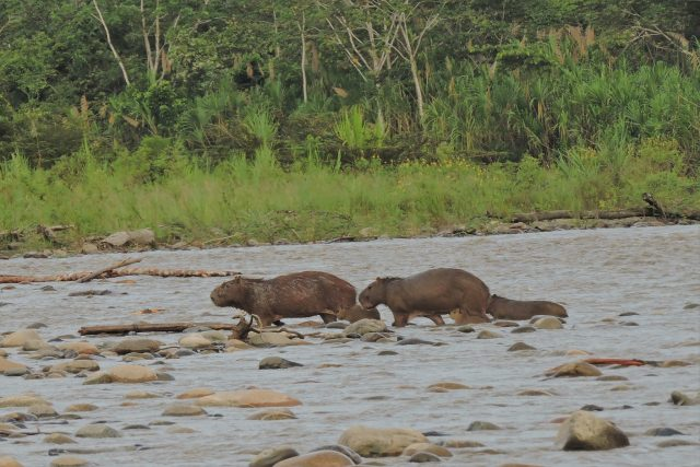Amazon Tour from Cusco , wildlife and nature in 2 days!