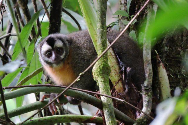 monkey seen on manu 2 days tour