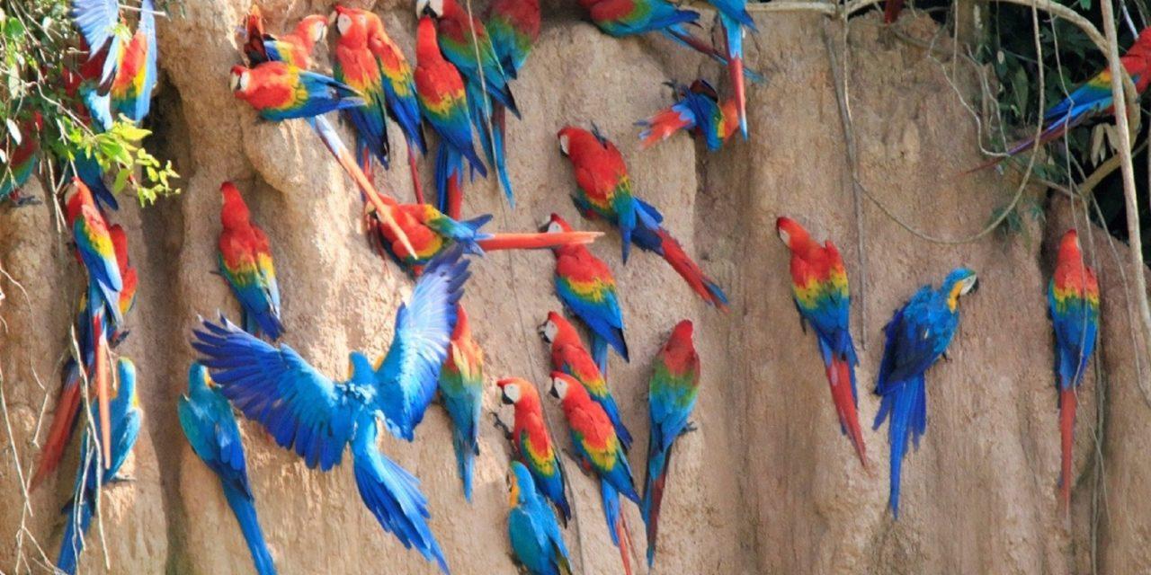 https://wildwatchperu.com/wp-content/uploads/2019/09/tambopata_birding-tour-1280x640.jpg