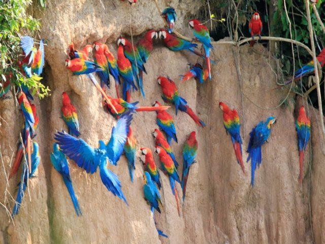 https://wildwatchperu.com/wp-content/uploads/2019/09/tambopata_birding-tour-640x480.jpg